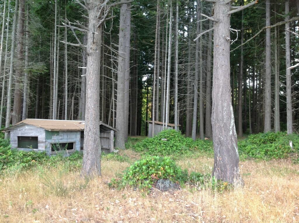 0 Ne Twin Spits Rd, Hansville, WA - USA (photo 5)