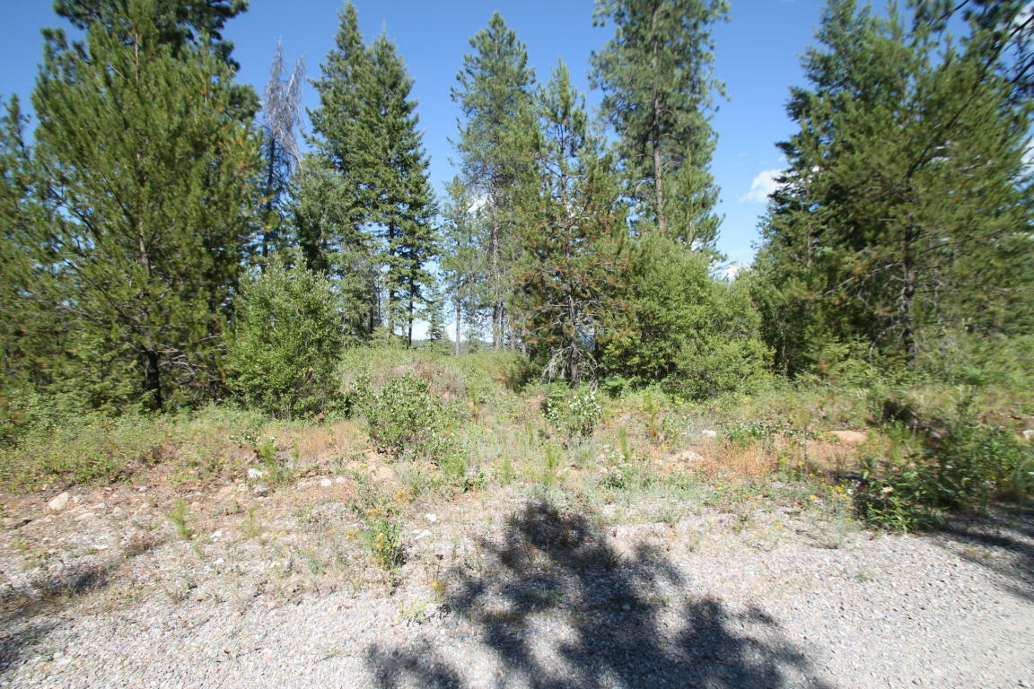 L8b1 Lion Quiet, Spirit Lake, ID - USA (photo 1)