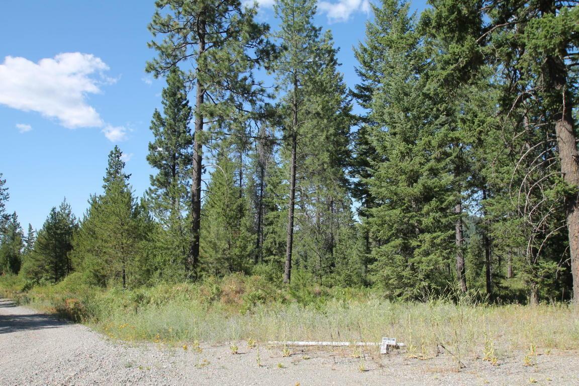 L8b1 Lion Quiet, Spirit Lake, ID - USA (photo 5)