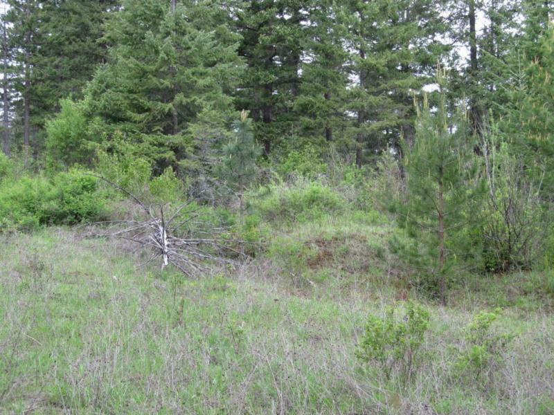 Nna Lodge Pole Ln., Elk, WA - USA (photo 3)