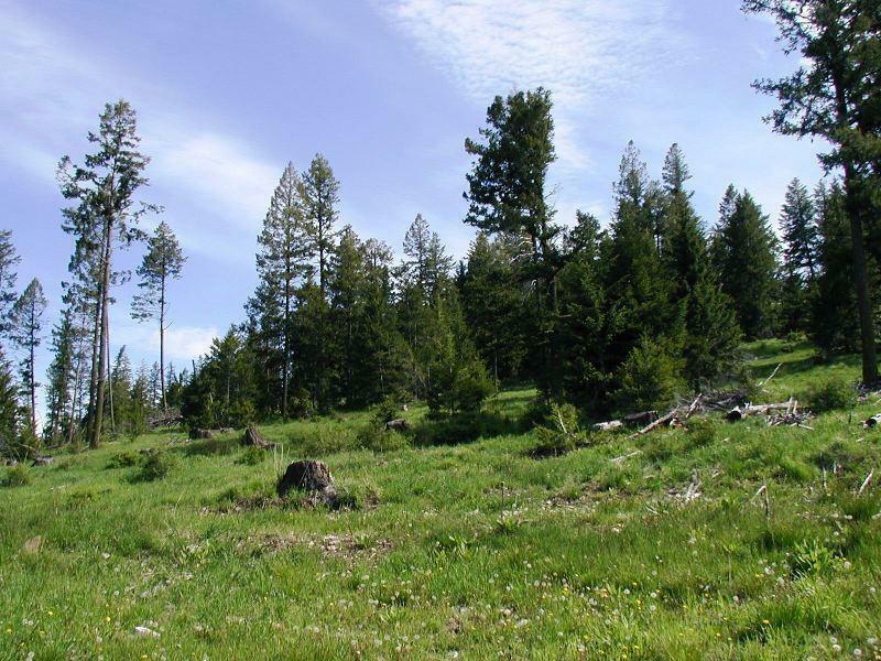 Tbd Horseshoe Mountain Rd, Republic, WA - USA (photo 3)