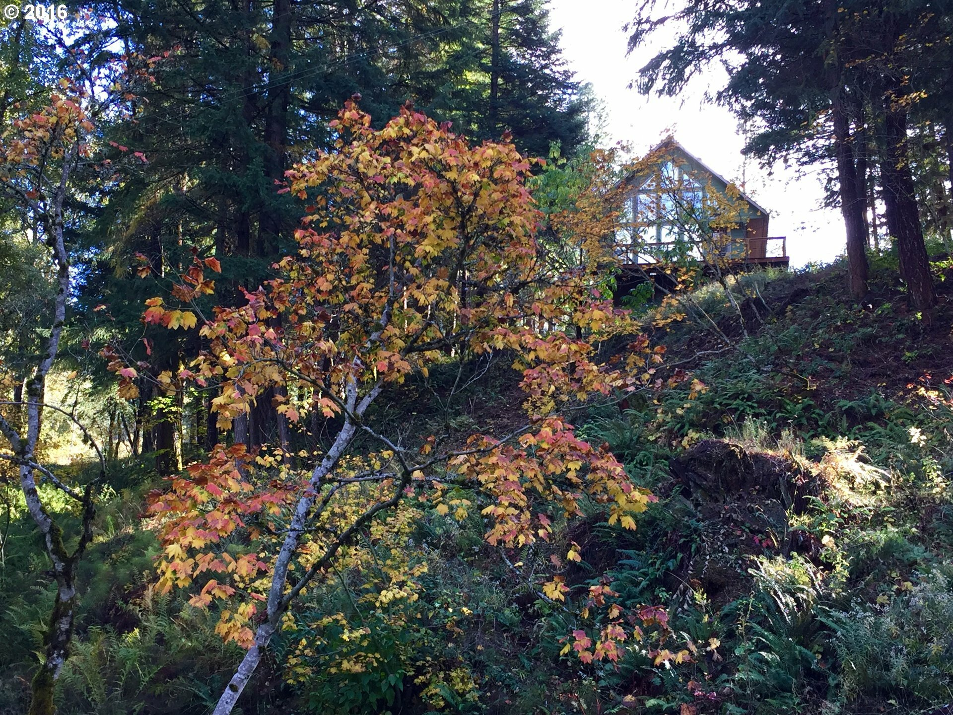 12 Husum Hills Dr, Husum, WA - USA (photo 2)