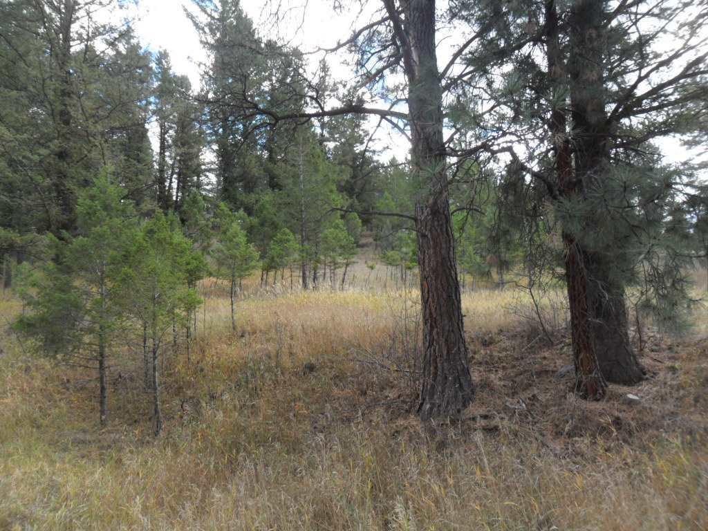 58 Hanging Tree Gulch, Clancy, MT - USA (photo 2)