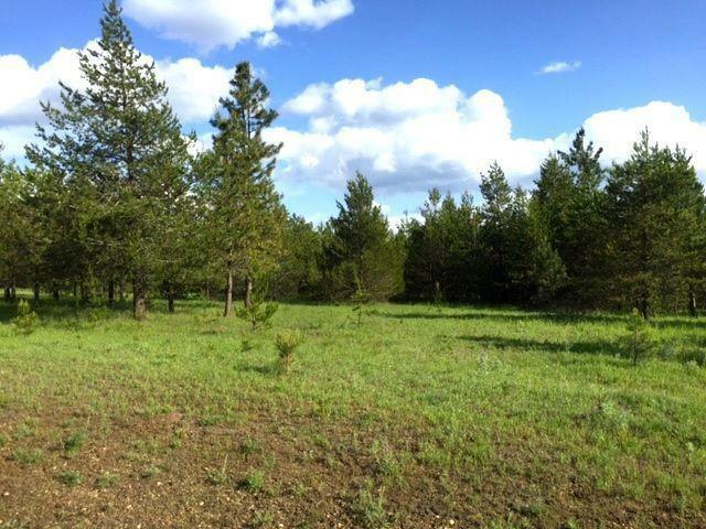 Nna E Scout Trail, Athol, ID - USA (photo 5)
