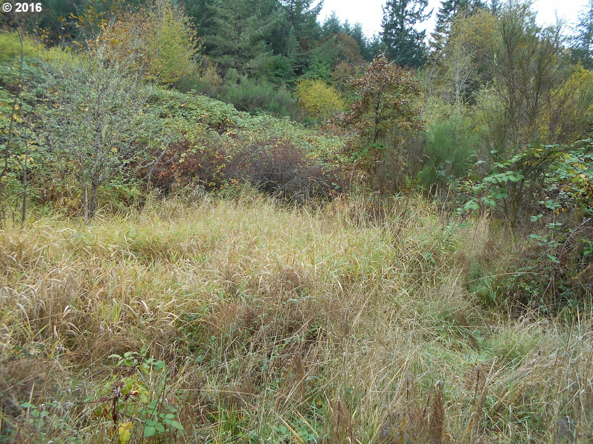 39525 Sw Fort Hill Rd, Willamina, OR - USA (photo 1)