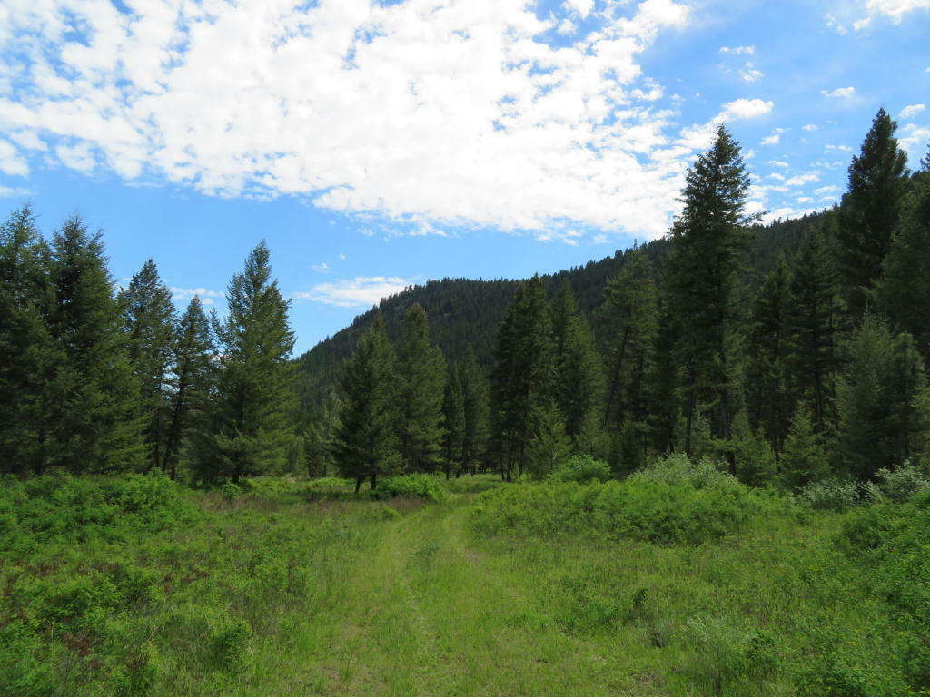 Tbd Kettle River Rd, Curlew, WA - USA (photo 1)