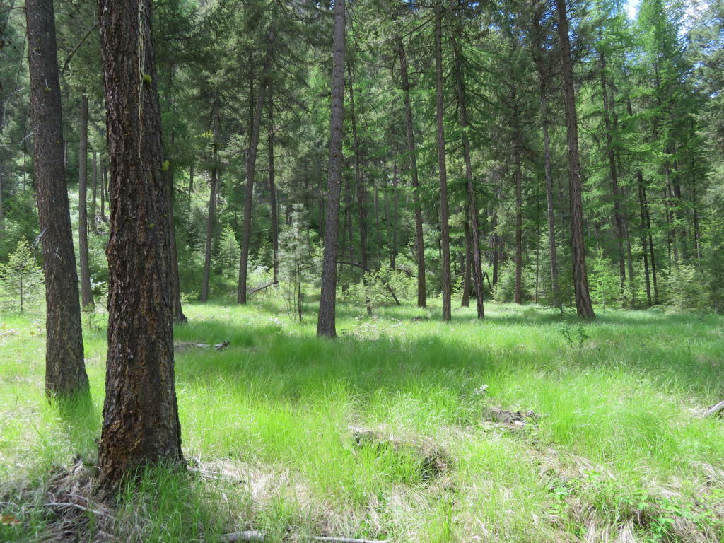 Tbd Kettle River Rd, Curlew, WA - USA (photo 2)