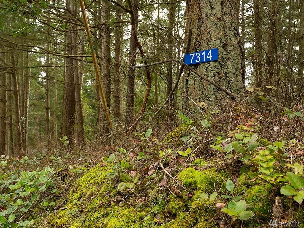 7314 Holiday Blvd, Guemes Island, WA - USA (photo 1)