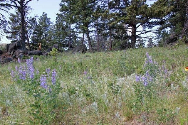 Ms 136 Grizzly Gulch, Helena, MT - USA (photo 1)
