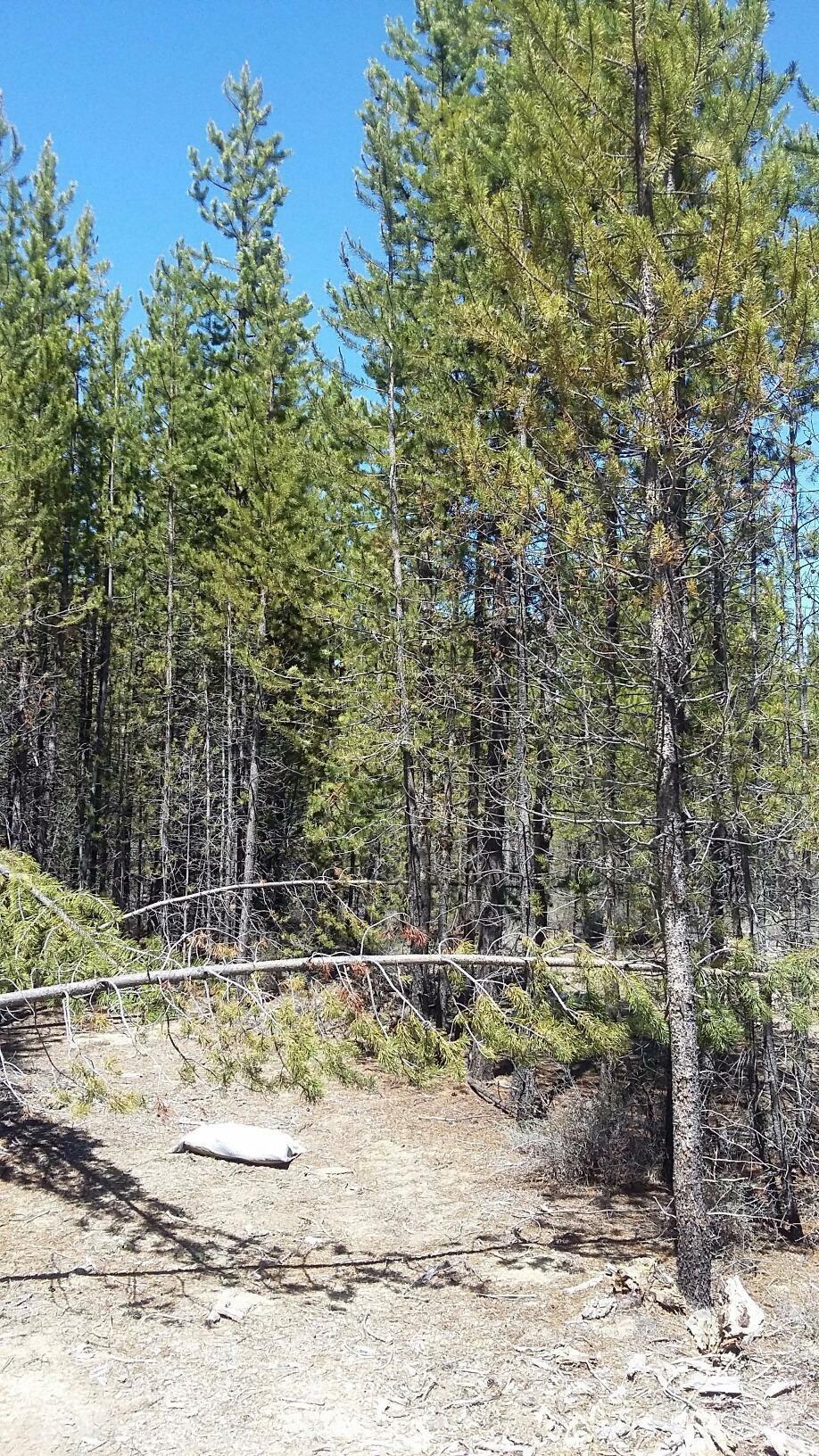 51371 Dianne Road, La Pine, OR - USA (photo 5)
