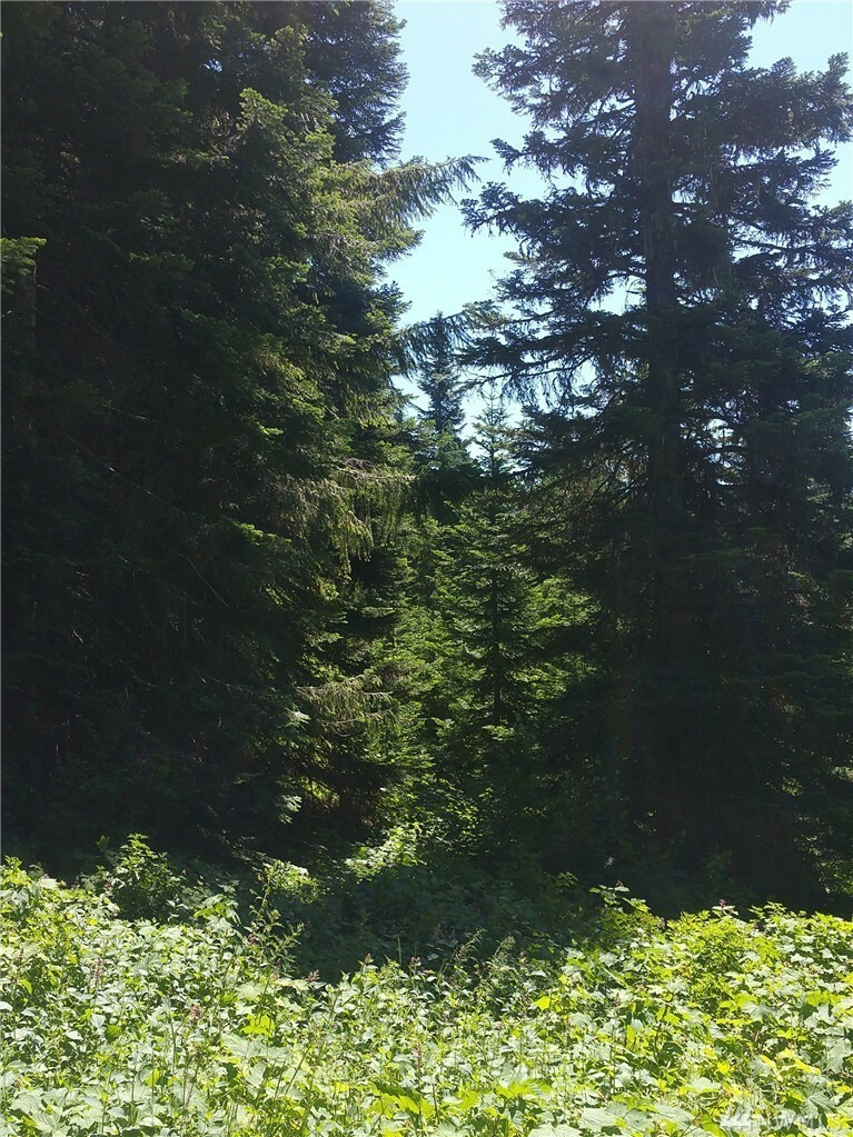 0 Huckleberry Peak Rd, Snoqualmie Pass, WA - USA (photo 3)